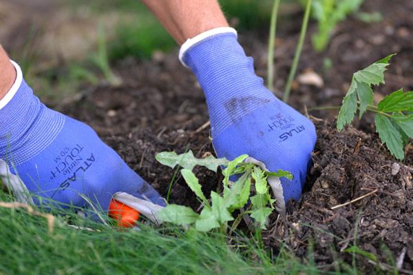 Pruning planting gloves